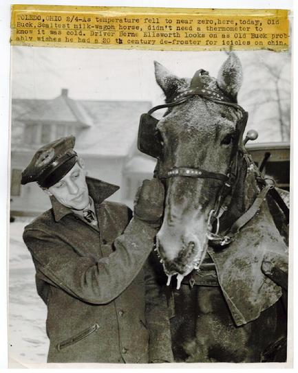 Original press photo of Freezing Sealtest Milk Wagon Driver & Horse Toledo Ohio.